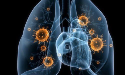 Паразитарные микроорганизмы проникают через слизистые оболочки органов дыхательной системы и динамично начинают размножаться, неизбежно попадая в кровь