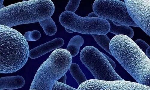 Возбудителями бактериального бронхита являются гемофильная палочка, легионелла, микоплазма, хламидии, моракселла