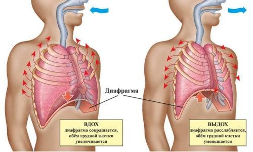 Спирография подразумевает фиксацию легочного объема при вдыхании и выдыхании воздуха