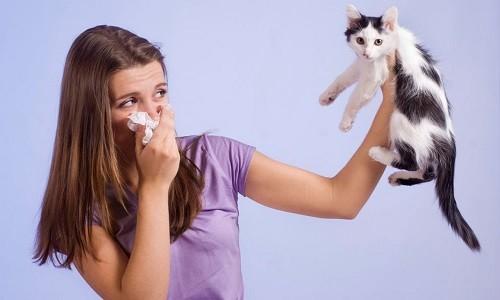 В основе развития астмы часто лежит какой-либо аллерген, поэтому заболевание может обостряться при появлении провоцирующего фактора