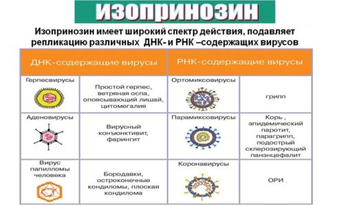 лекарство противовирусное изопринозин