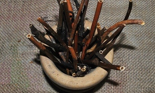 Для приготовления лечебного средства от бронхита можно использовать корень алтея