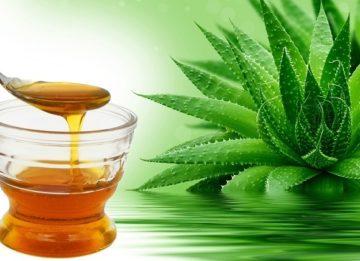 Алоэ и мед при лечении бронхита