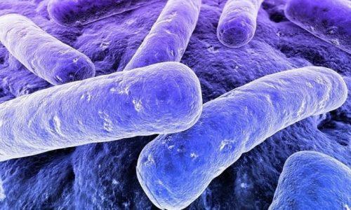 К развитию бронхита у малышей приводит проникновение в бронхи бактерий