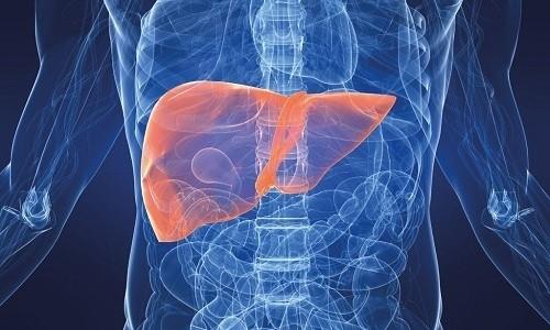 Метаболизм препарата происходит в печени