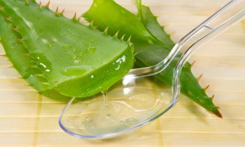 Для избавления от хронического бронхита необходимо барсучий жир смешать с соком алоэ